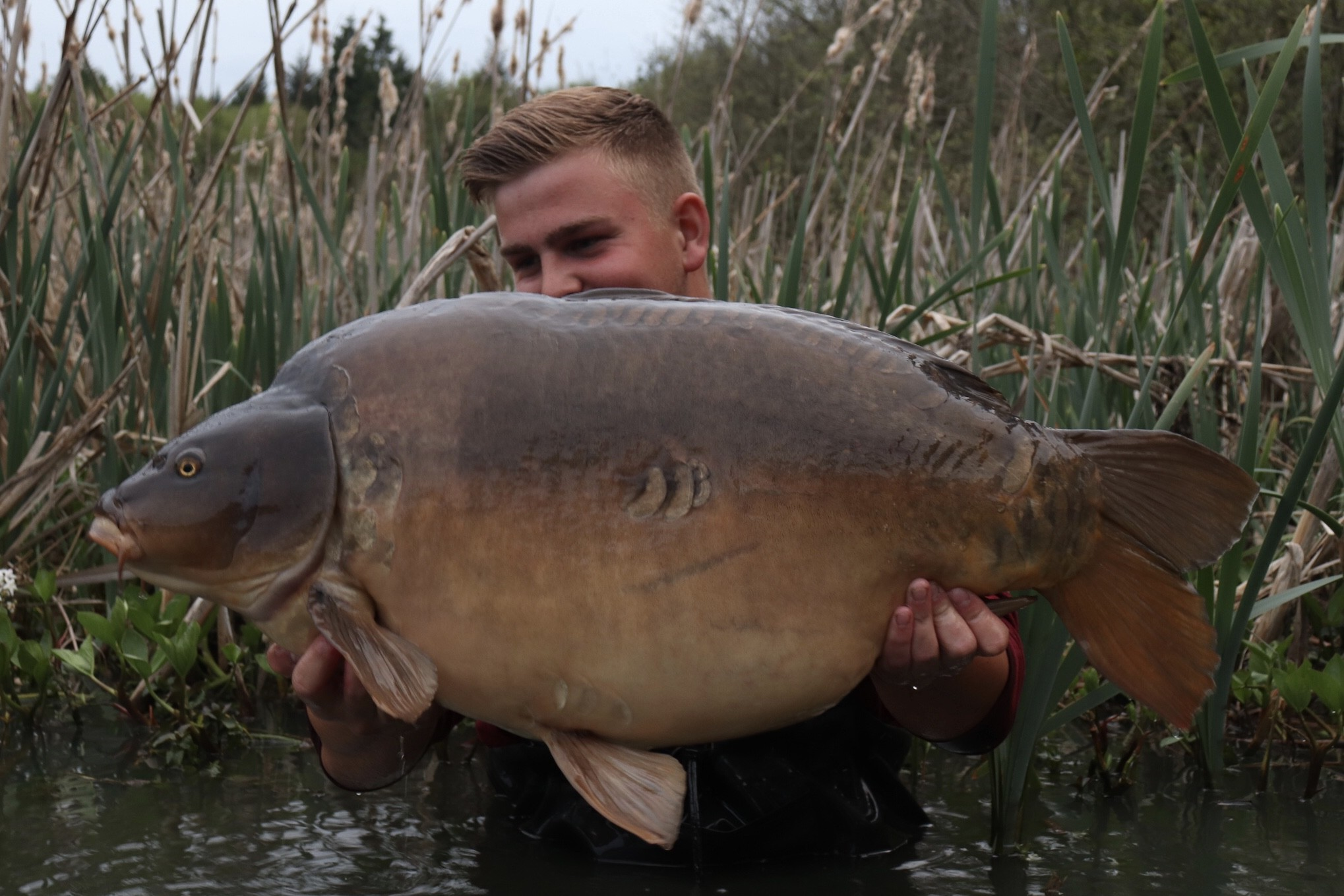 35lb 12oz  caught on