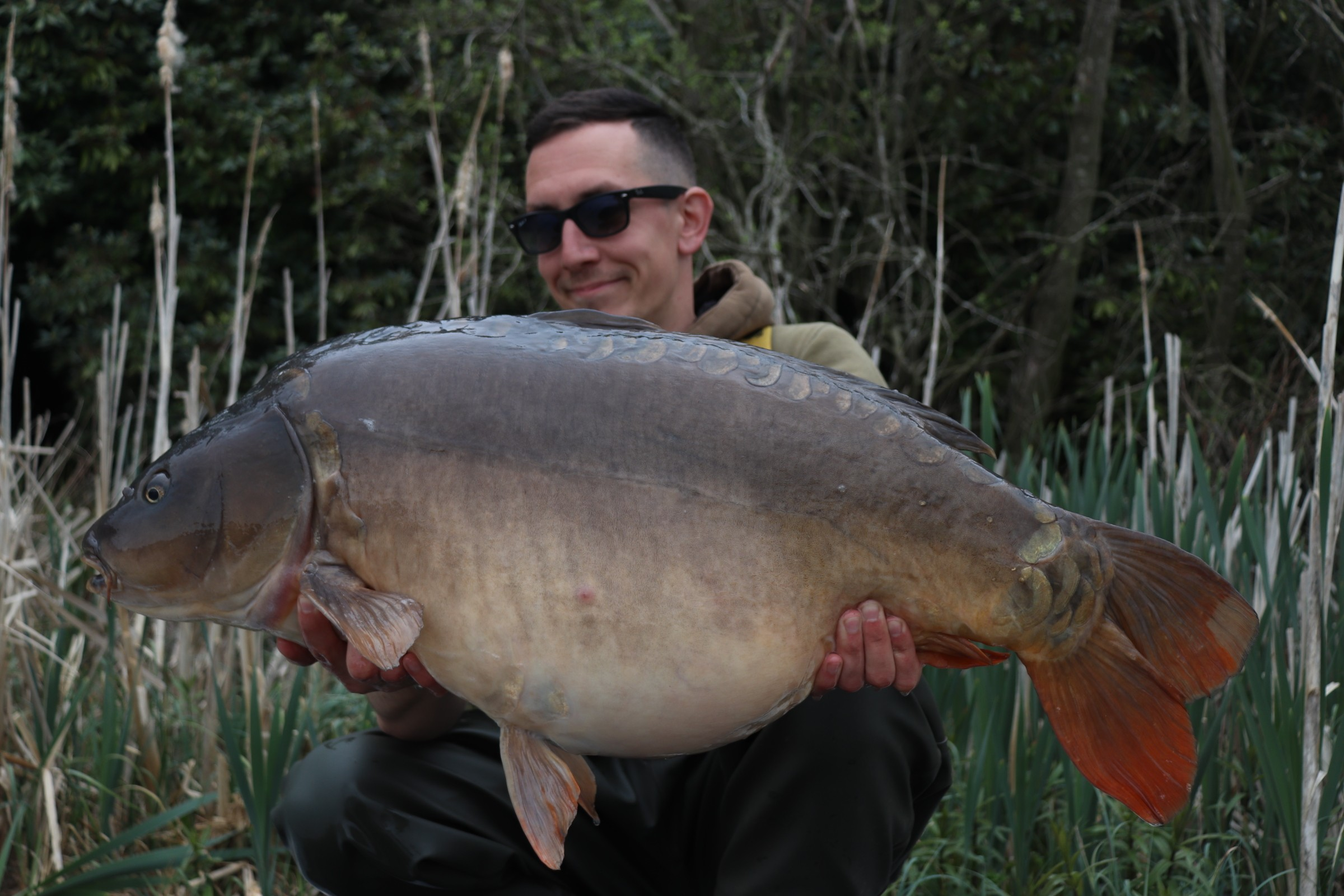 36lb 14oz  caught on