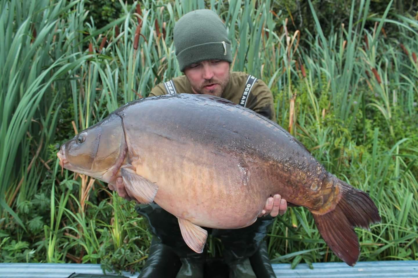 30lb 0oz  caught on