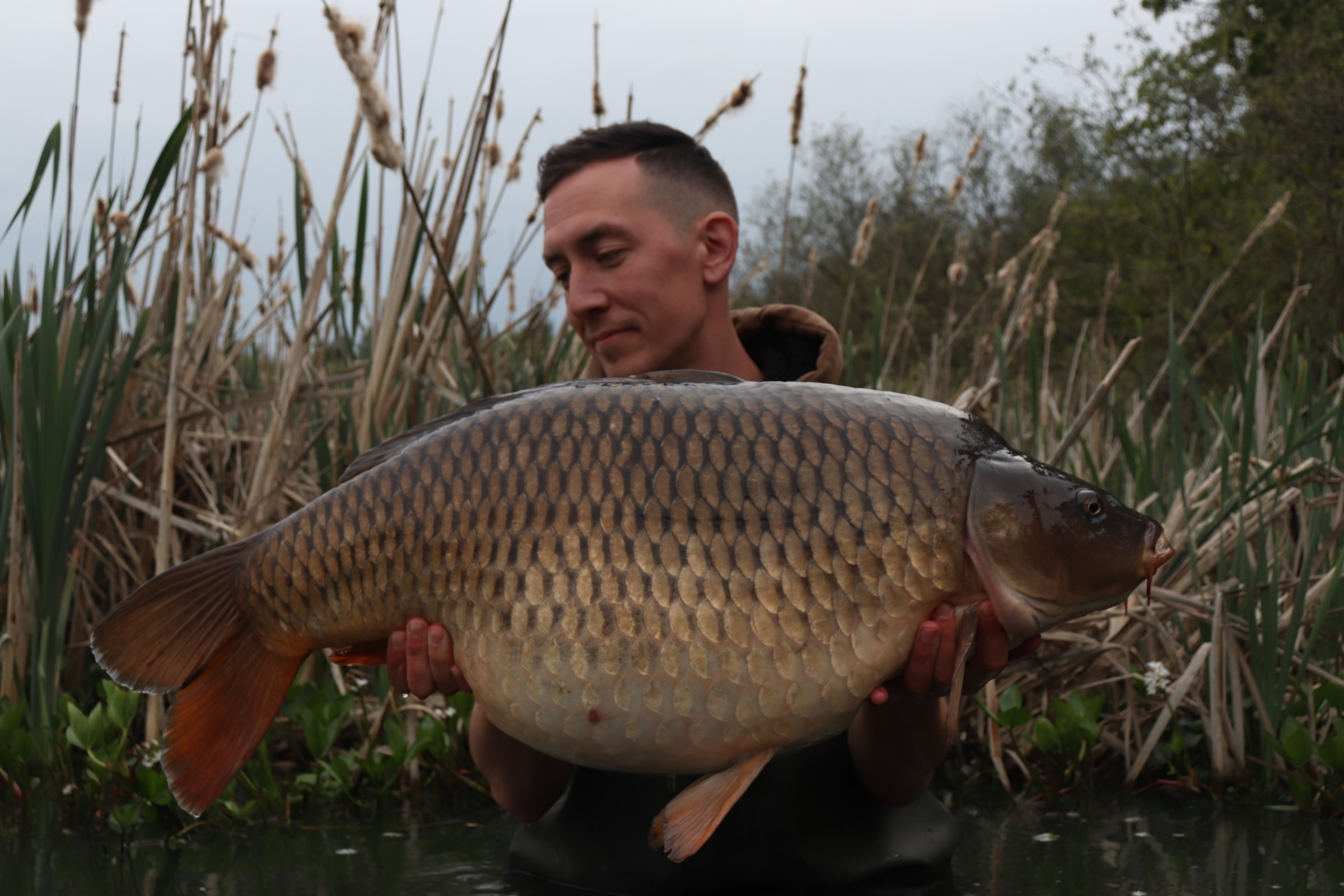 33lb 12oz  caught on