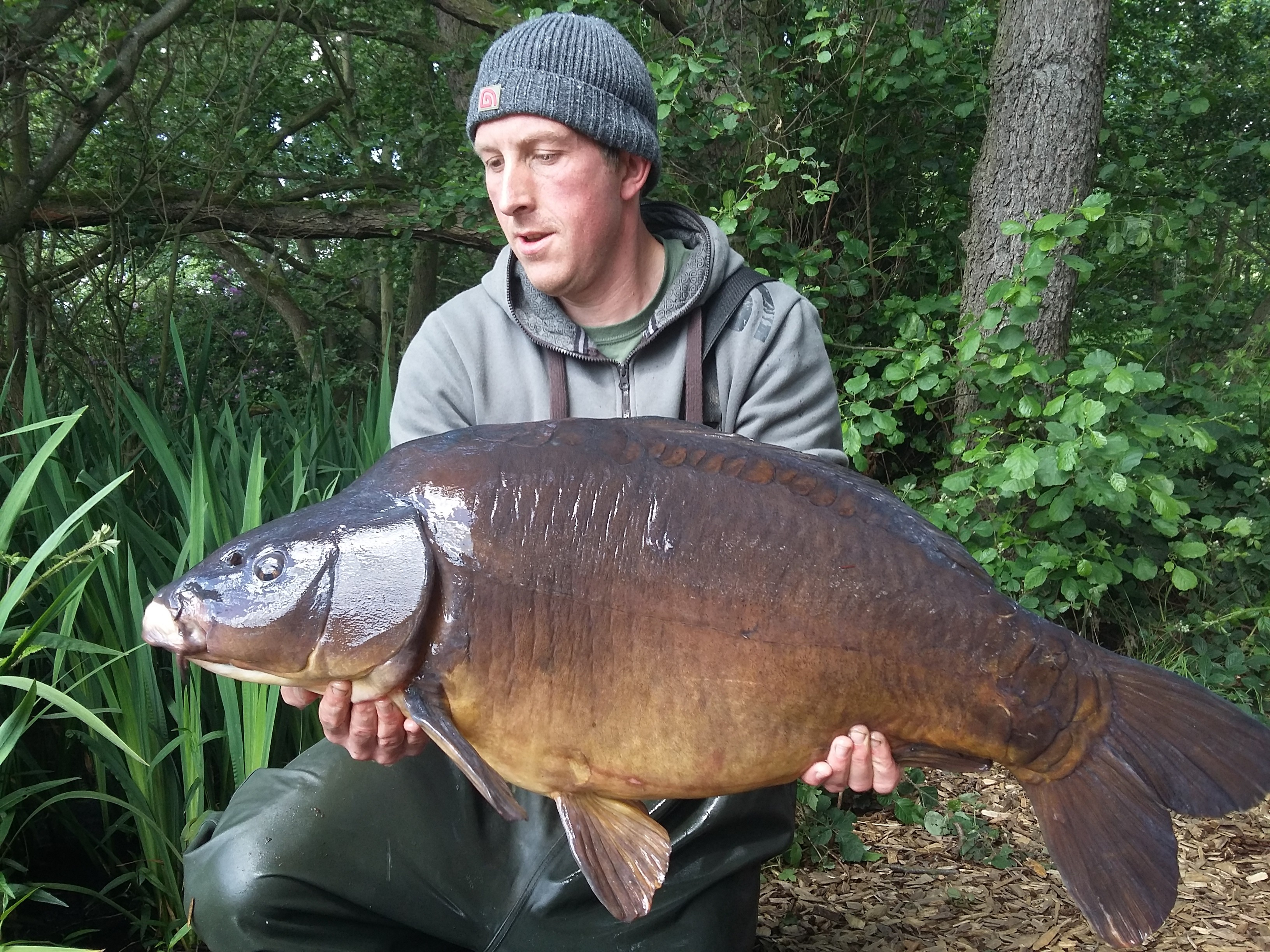 37lb 0oz  caught on