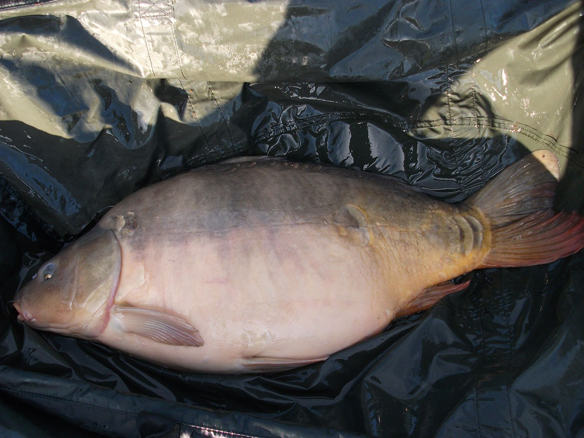 39-00 caught on Boilies
