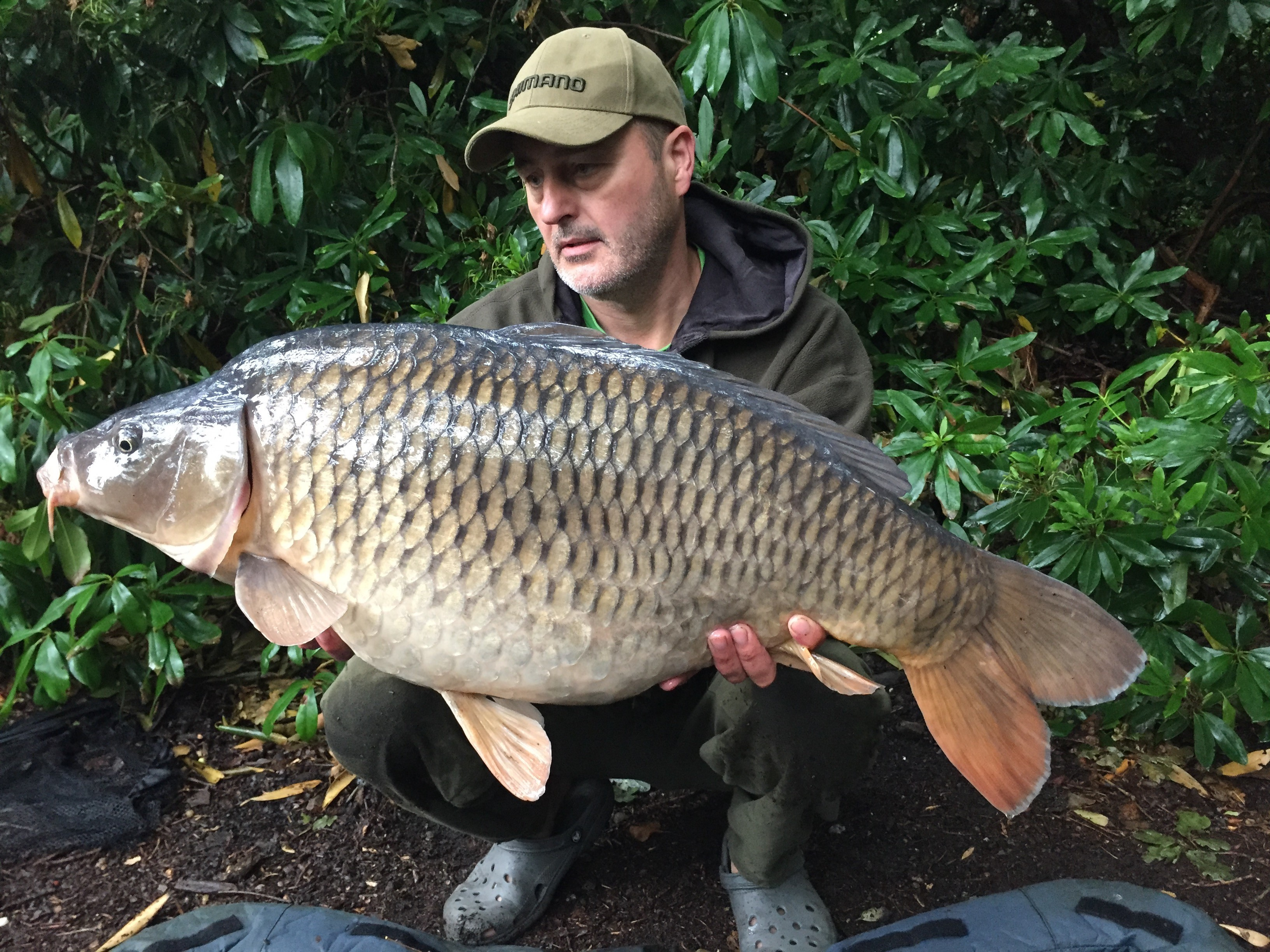 30lb+ Common  caught on