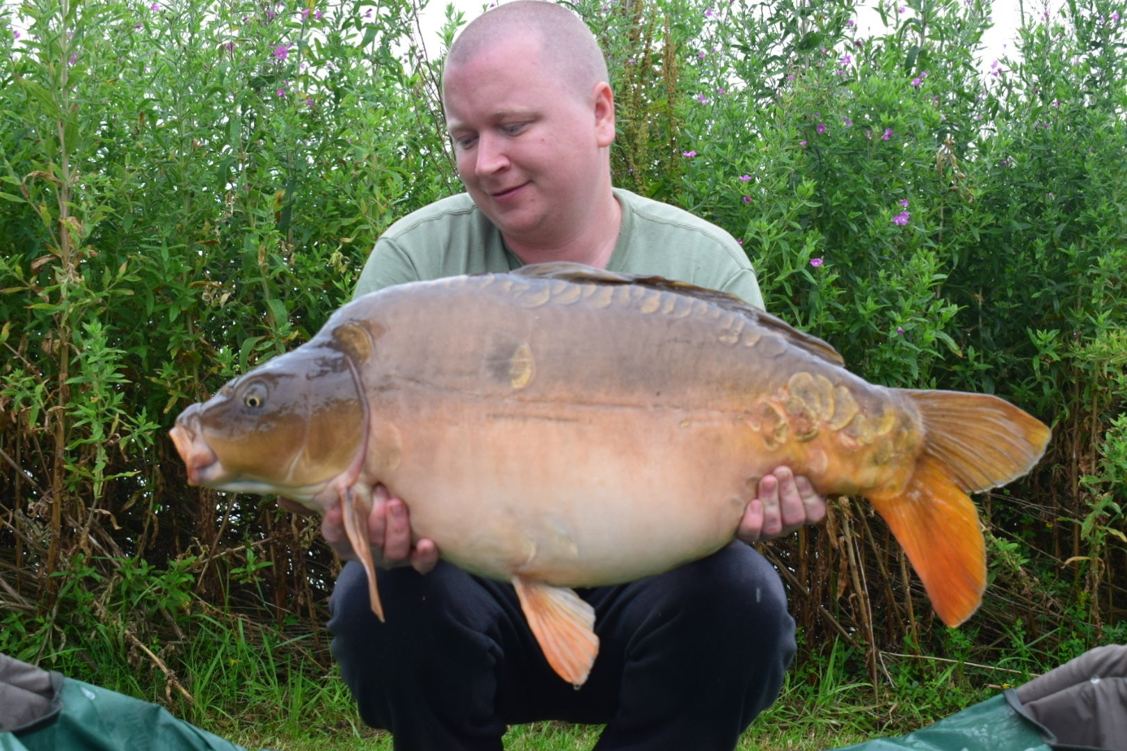 26lb 08oz  caught on