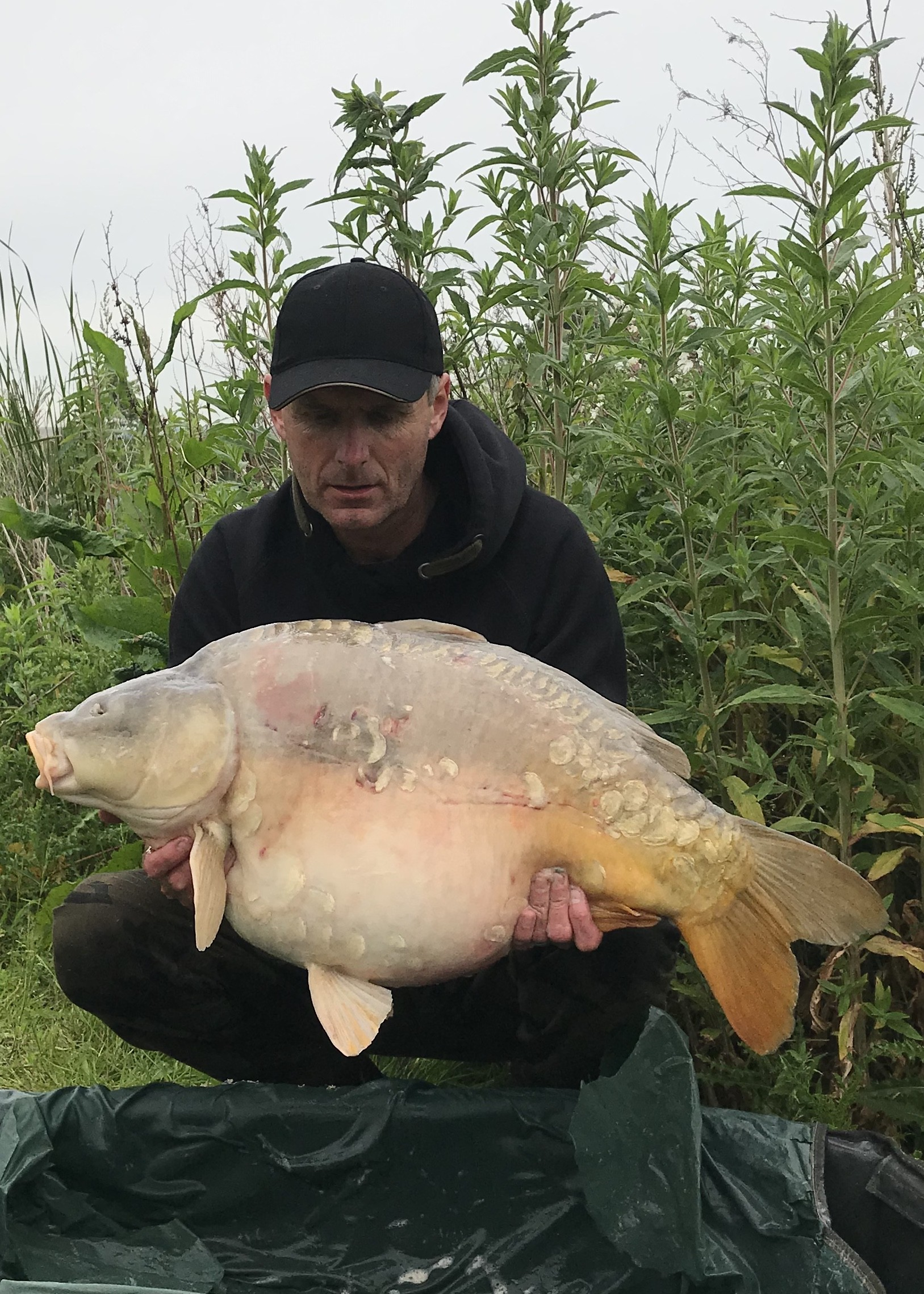 33lb 12oz 'Nelson'  caught on