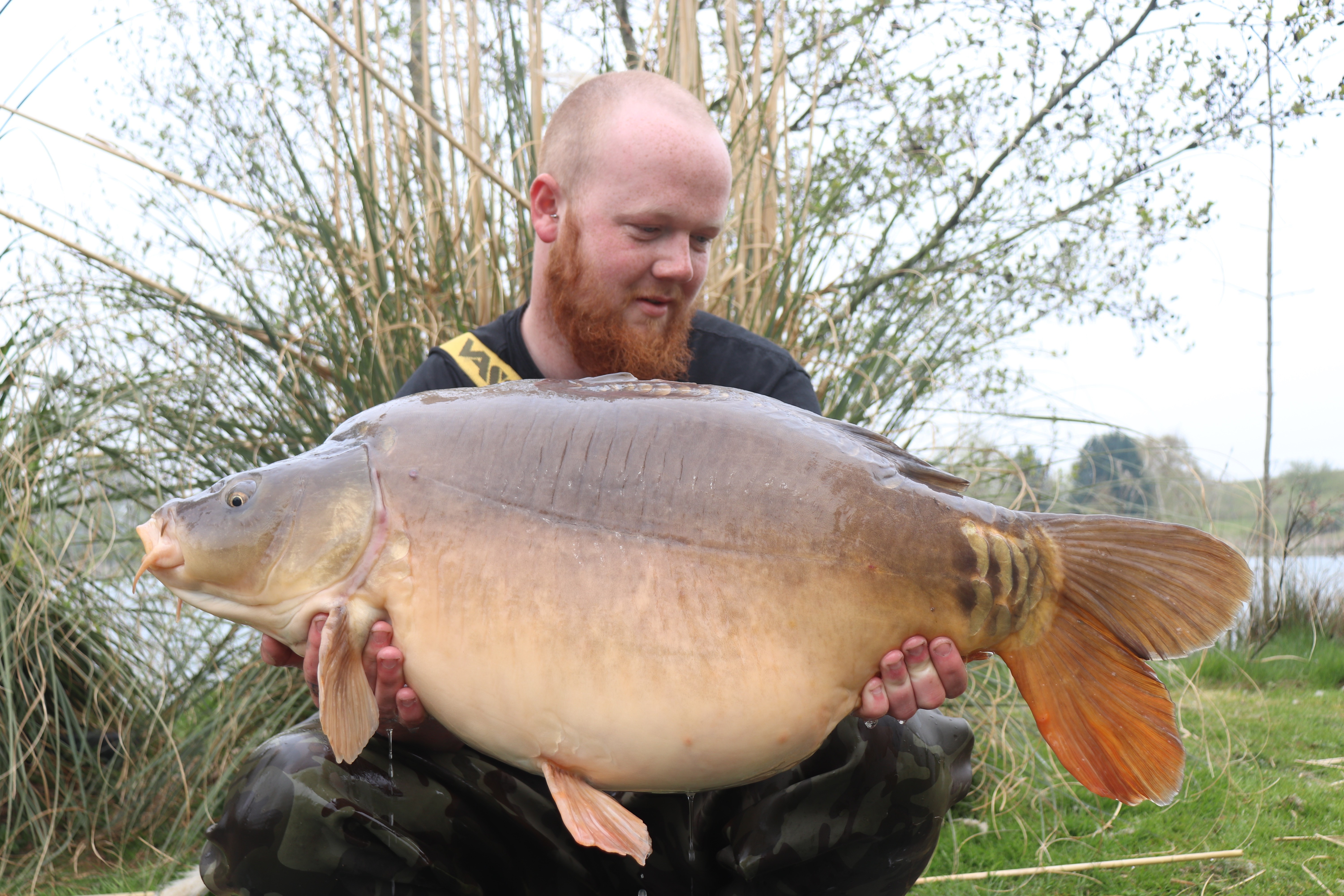 37lb 03oz 'The Pig'  caught on 5 kilo of Maize