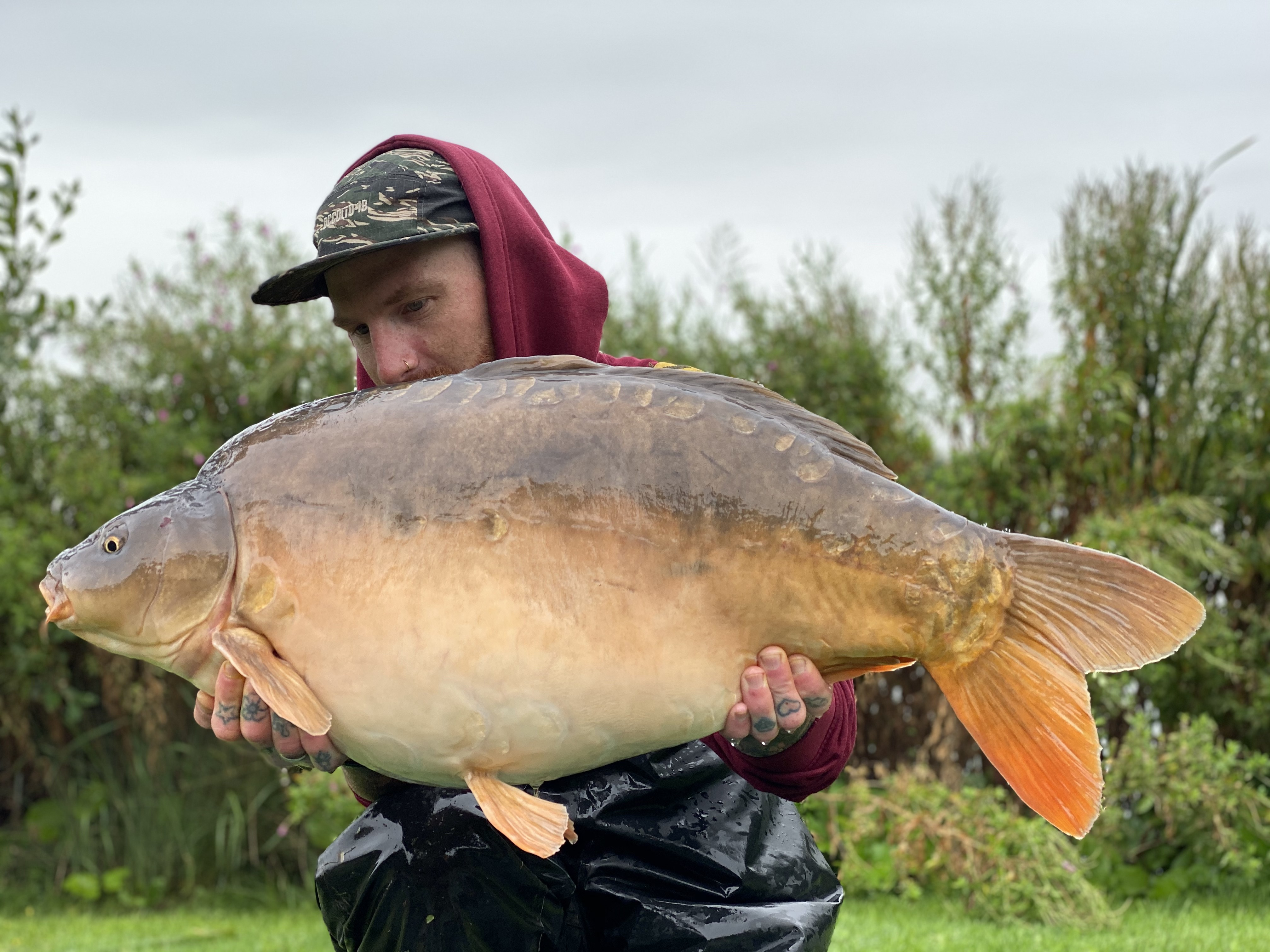 33lb 08oz  caught on